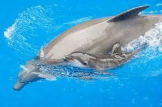 baby dolphin! SQUEEEEEE