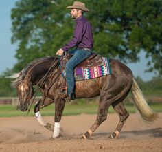Reining HorseYou can find Reining horses and more on our website. Cute Horses, Horse Love, Beautiful Horses, Barrel Racing Saddles, Barrel Racing Horses, Barrel Horse, Reining Horses, Breyer Horses, Western Pleasure Horses