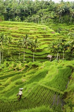 Ubud, Bali. One of Indonesia's most spectacular places to visit.