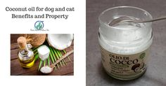 Coconut oil for dog and cat, It supports cats with FIV/FeLV It improves digestion and permits to better absorb the nutrients It helps to eliminate hairballs
