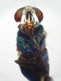 Egy újabb makró – csak erős idegzetűeknek :)