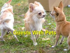 How to Prepare Your Home for Guests with Pets - Champion Wood Animal Hospital Wood Animal, Corgi, Pets, Animals, Home, Animals And Pets, Animales, Animaux, House