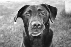 TIps for Better Pet Photography - PictureCorrect