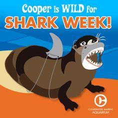 Cooper is celebrating Shark Week in style! #SharkWeek