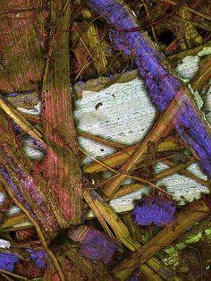 Plant fibers in a paper (100x). Confocal microscopy.