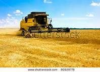 big feild of grain with many combines - Bing Images