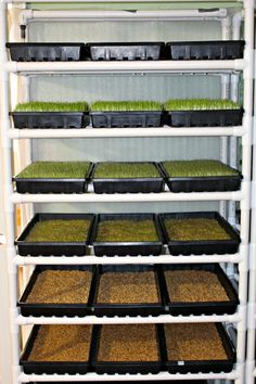 Growing fodder for your homestead animals growing hydroponic DIY Fodder System for Animals Aquaponics Diy, Aquaponics System, Hydroponic Gardening, Aquaponics Greenhouse, Vegetable Gardening, Container Gardening, Fodder System, Chicken Tractors, Chicken Feed