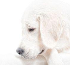 Sad pup.