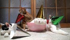 Funny cats ( 10 photos)