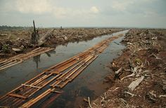 6 environmental challenges facing Southeast Asia (and what you can do to help)