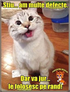 Happy Animals, Animals And Pets, Meme Gen, Cat Face, Funny Moments, My Photos, Funny Pictures, Funny Quotes, Jokes