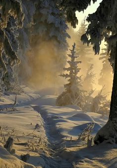One of the most beautiful winter forest scenes I've ever laid eyes on #snow ☮k☮ #winter