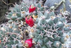 Field photos from Hidalgo, Mexico