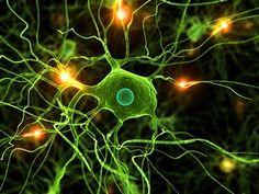 neurons!