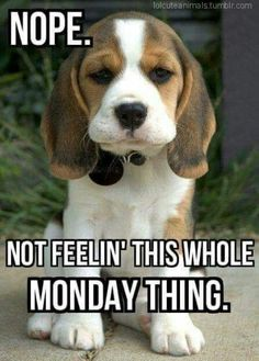 Holiday Meme : holiday, Holiday, Memes, Ideas, Bones, Funny,, Memes,, Humor