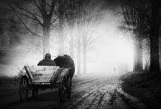 An early morning encounter... by Sebastian Prioteasa