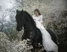 .so beautiful--bride in white on a black stallion