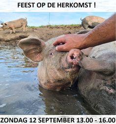 Amsterdam Weekend, September, Animals, Instagram, Ideas, Animales, Animaux, Animal, Animais