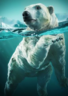 Polar bear by Marcos de Moraes Sampaio | 3D | CGSociety