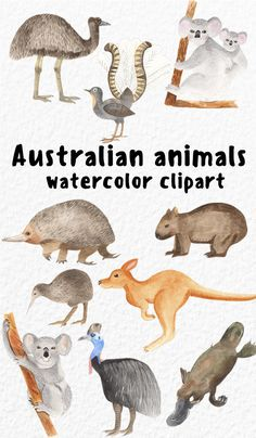 Baby Platypus, Watercolor Plants, Watercolor Animals, Wombat, Cute Little Animals, Baby Animals, Cartoon Drawings, Animal Drawings, Norman