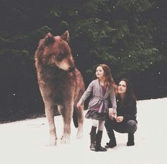 the twilight saga Twilight Edward, Twilight Film, Jacob Black Twilight, Twilight Saga Quotes, Twilight Renesmee, Vampire Twilight, Twilight Saga Series, Twilight Breaking Dawn, Breaking Dawn Part 2