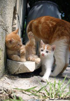 cucciolata di gatti giocano protetti