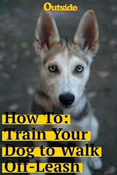 How to Train Your Dog to Walk Off-Leash #dogs #dogtraining #dogownertips