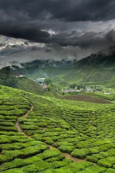 Green Tea Fields & Factory - Fujian Province, China. >>> I've always wanted to visit an area where tea comes from.