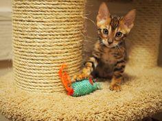 It's mine ! :3
