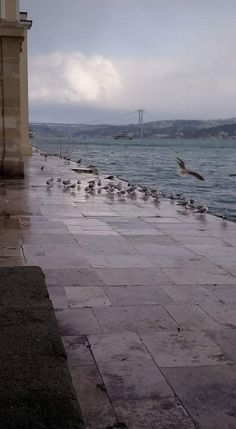 Insta Story, Istanbul, Beautiful Places, Beach, Water, Floral, Artisan, Travel, Outdoor