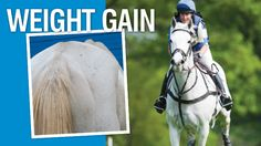 While many horse owners struggle to keep their easy keepers lean, others have the opposite problem: their horses need to gain weight.
