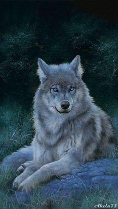 2015/08/26 Lobo Wolf