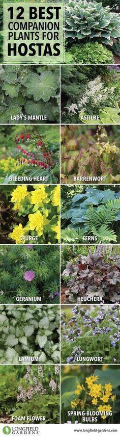 Companion plants for hostas | Shade plant combinations #GardenLandscapingTrees