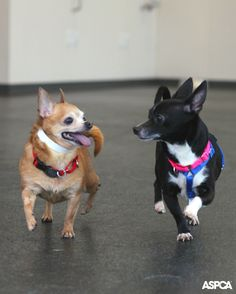 Bruno came back to us after seven years with a bonded friend Corrio in tow. Fortunately found a happy home together! Read their Happy Tail here: http://www.aspca.org/blog/aspca-happy-tails-loving-home-bruno-and-corrio