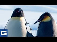 Geico: The Great Penguin Migration Best Commercials, Viral Videos, Youtube, Emperor Penguins, Animals, Ads, Hilarious, Funny, Things To Sell