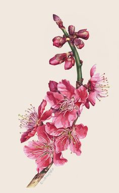 https://www.behance.net/gallery/Botanical-Portrait-II-FLOWER/3478179
