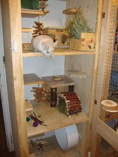 Cage Chinchilla, Chinchilla Care, Chinchillas, Large Hamster Cages, Guinnea Pig, Mouse Cage, Small Animal Cage, Rabbit Cages, Rabbit Hutches
