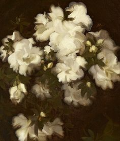 Stuart Park    Still Life with White Roses    19th century