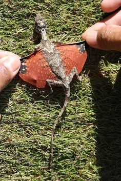 Okay, I didn't know which board to put this in, but this miniature dragon is the coolest thing ever.