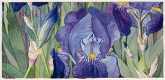 Purple Iris Thicket by Leah Schwartz <close... but not the print I have from 1983... lacks the wonderful papery sepal parts>
