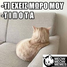 Funny Images, Funny Photos, Stupid Funny Memes, Hilarious, Funny Greek, Greek Words, Special Quotes, Greek Quotes, Have A Laugh