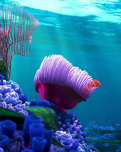 Finding Nemo love this movie Disney Dream, Disney Love, Disney Magic, Disney Art, Walt Disney, Foto Macro, Underwater Life, Ocean Creatures, Finding Nemo