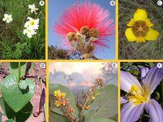 Flores da Flora do Cerrado do Brasil