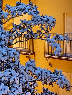 Segunda Nevada de 2010 en Jaén by Juliopas, via Flickr