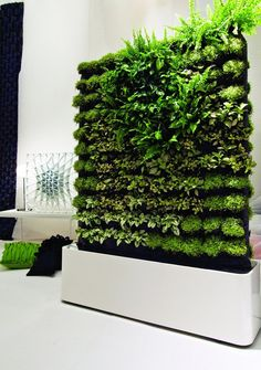 You might install a piece of stunning moss art purely for aesthetics, but there are health benefits to be had from the unique decor as well.