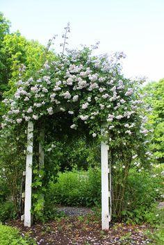 52 FLEA: Paula's Cottage Gardens