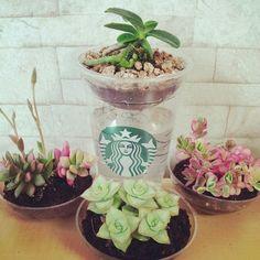 coffee, cuppot, gardening, garden, pot, plant, 다육, 커피, 스타벅스, starbucks, 재활용, flower, 식물, 스벅, 정원, amazing, terrarium, 만들기, 컵, diy, green, 화분
