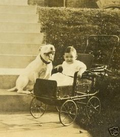 "Grinning Pit Bull and baby in a pram, early 1900s. - They didn't say this breed was vicious then, now did they! - Pit Bull - known as the ""nanny dog"""