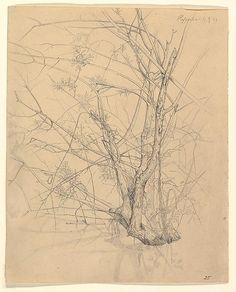 Johann Wilhelm Preyer, Study of a Tree Standing in Water
