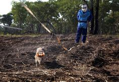 Over two decades after the civil war in Mozambique finished, the country has now achieved 'free of known landmine' status.   Africa Geographic